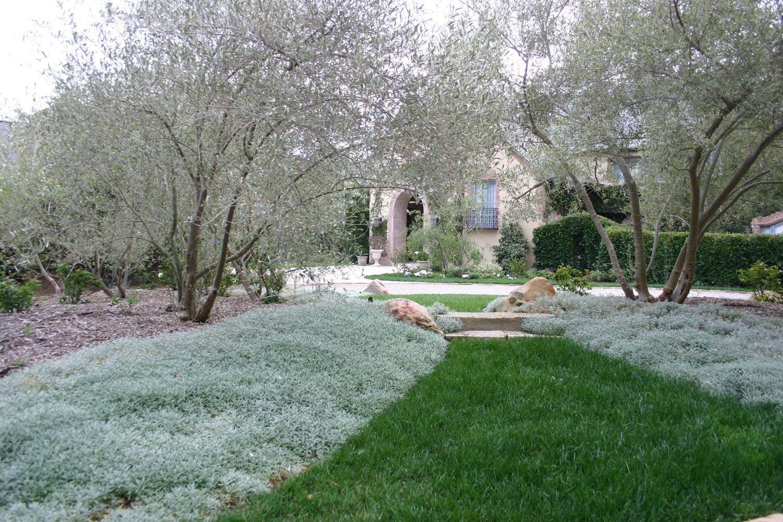 Garden landscape trees  Landscape Gardening Trees Plantings  Montecito Mountain Home