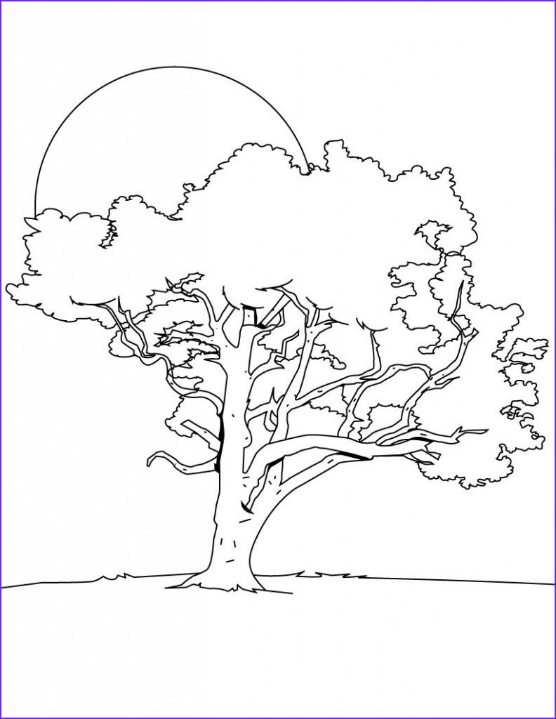 15 Beautiful Tree Coloring Pages Gallery Tree Coloring Page Tree Coloring Pages Christmas Tree Coloring Page
