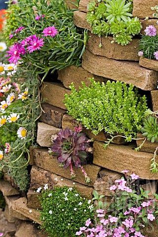 Steingarten - Mauer - Kakteen - Blumen - Blühpflanzen Schöner - ideen gestaltung steingarten hang