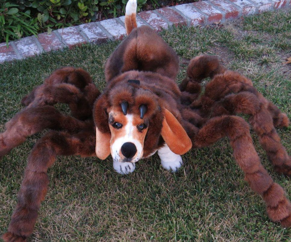 Dog Tarantula Costume Dog Spider Costume Spider Dog Large Dog