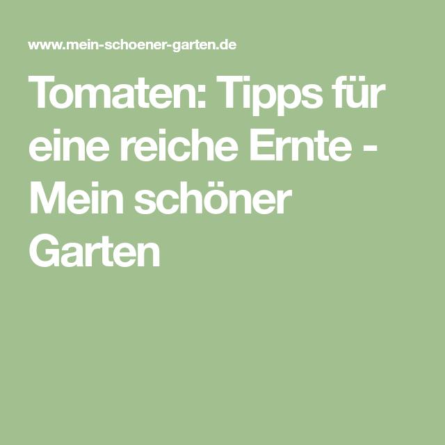 Tomaten Gartenideen Tomaten Kräuter Pflanzen Und Gemüseanbau