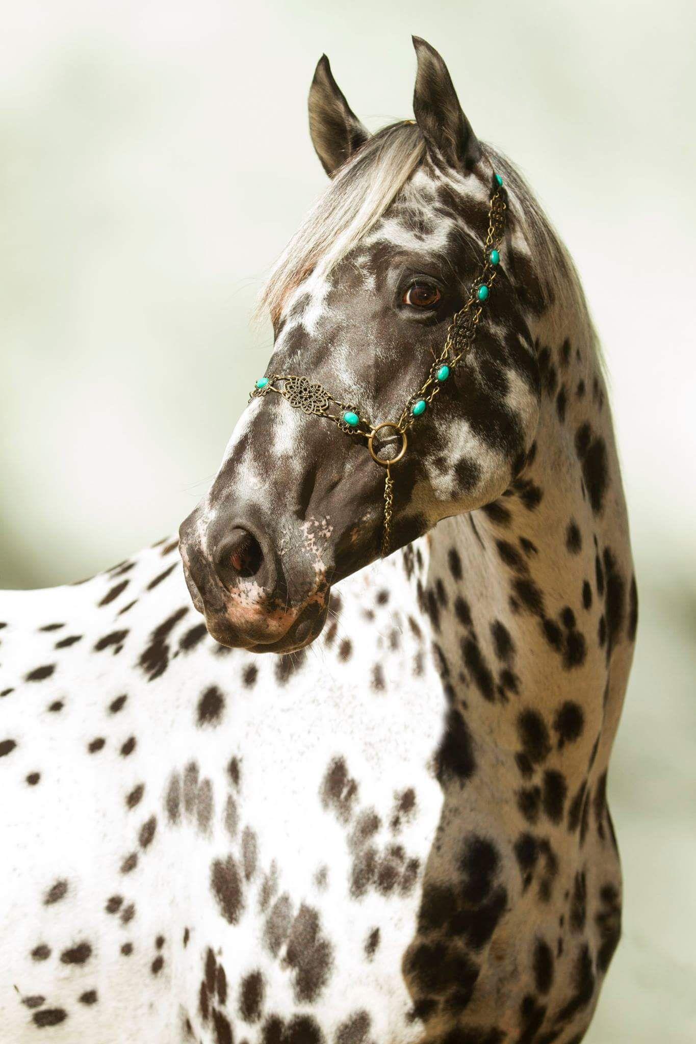 состоят двух картинки кони пестрые для размещения