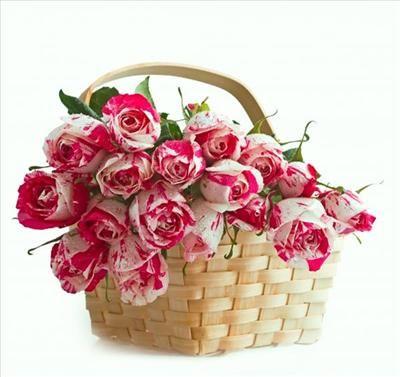 Zyczenia Na 25 Urodziny Rose Flowers Bloom
