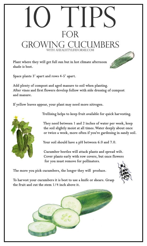 Follow these tips for cucumber growing success (and click here to find tips for tons of other veggies). | 23 Diagrams That Make Gardening So Much Easier