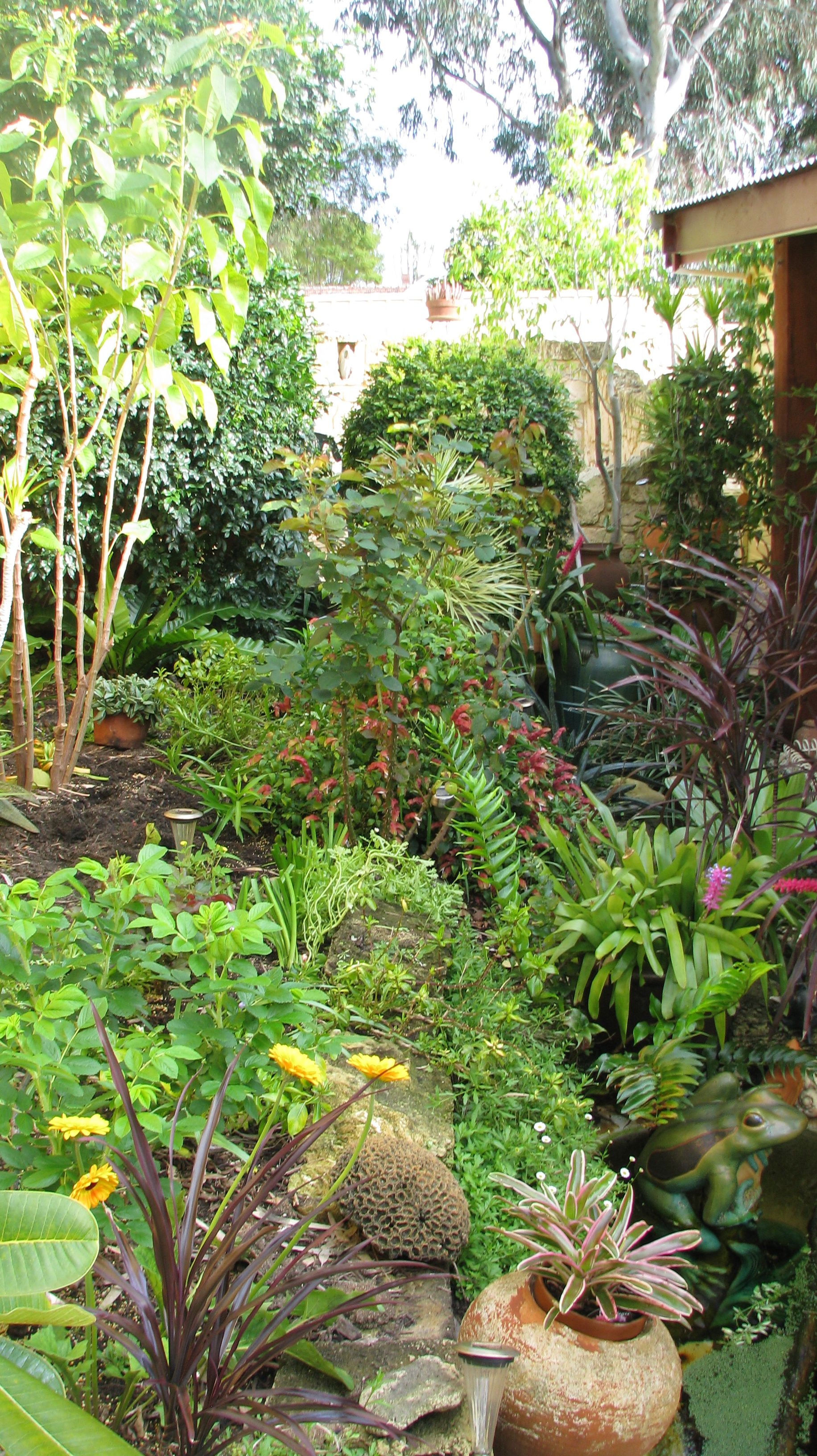 Pin by Jose Peralta on Bello Jardin Tropical | Garden, Plants