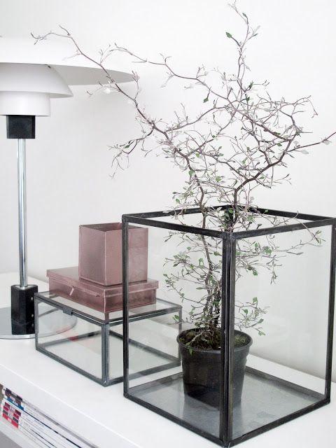Glazen Kubus Met Foto.Glass Cube Vase Plant Decoration Plant Glazen Kubus