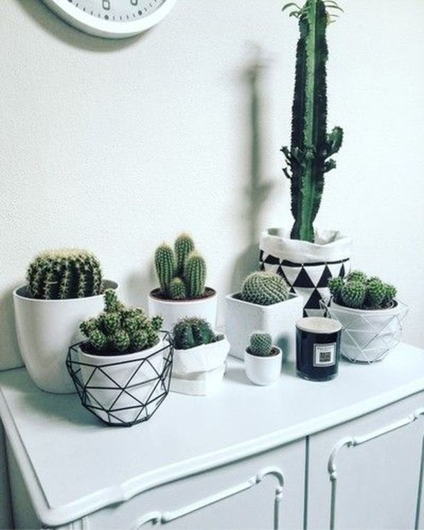 24 Creative and Beautiful Cactus Room Decor images