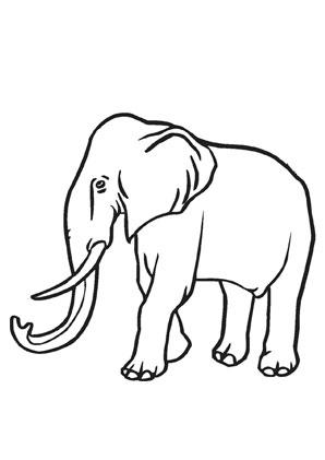 Ausmalbild Elefant Mit Langem Stosszahn Zum Ausmalen Ausmalbilder Ausmalbilderelefanten Malvorlagen Ausmalen Elefant Zeichnung Ausmalen Elefanten
