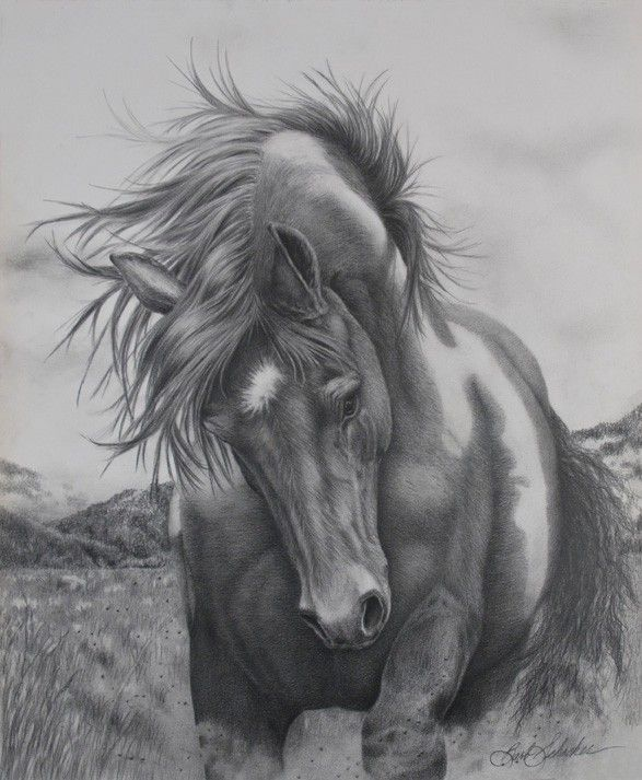 Barb Schacher Fine Art Portrait Equine Wildlife Pencil Drawing
