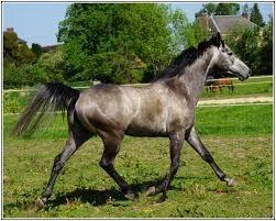 """Résultat de recherche d'images pour """"pur sang fier photos chevaux"""""""