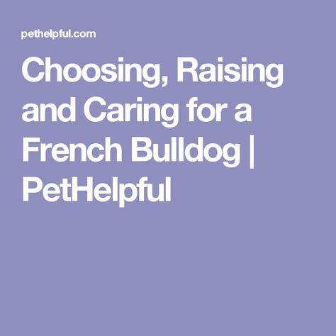 Choosing, Raising, and Caring for a French Bulldog