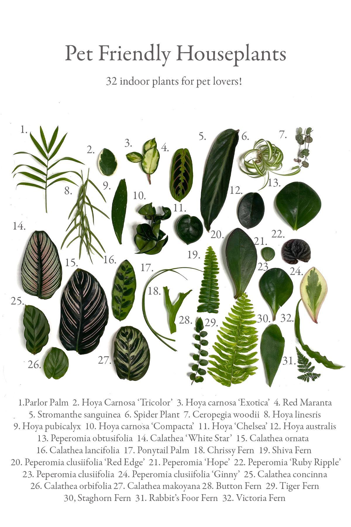 Pet Friendly Indoor Plants | Free Shipping | Planterina.com