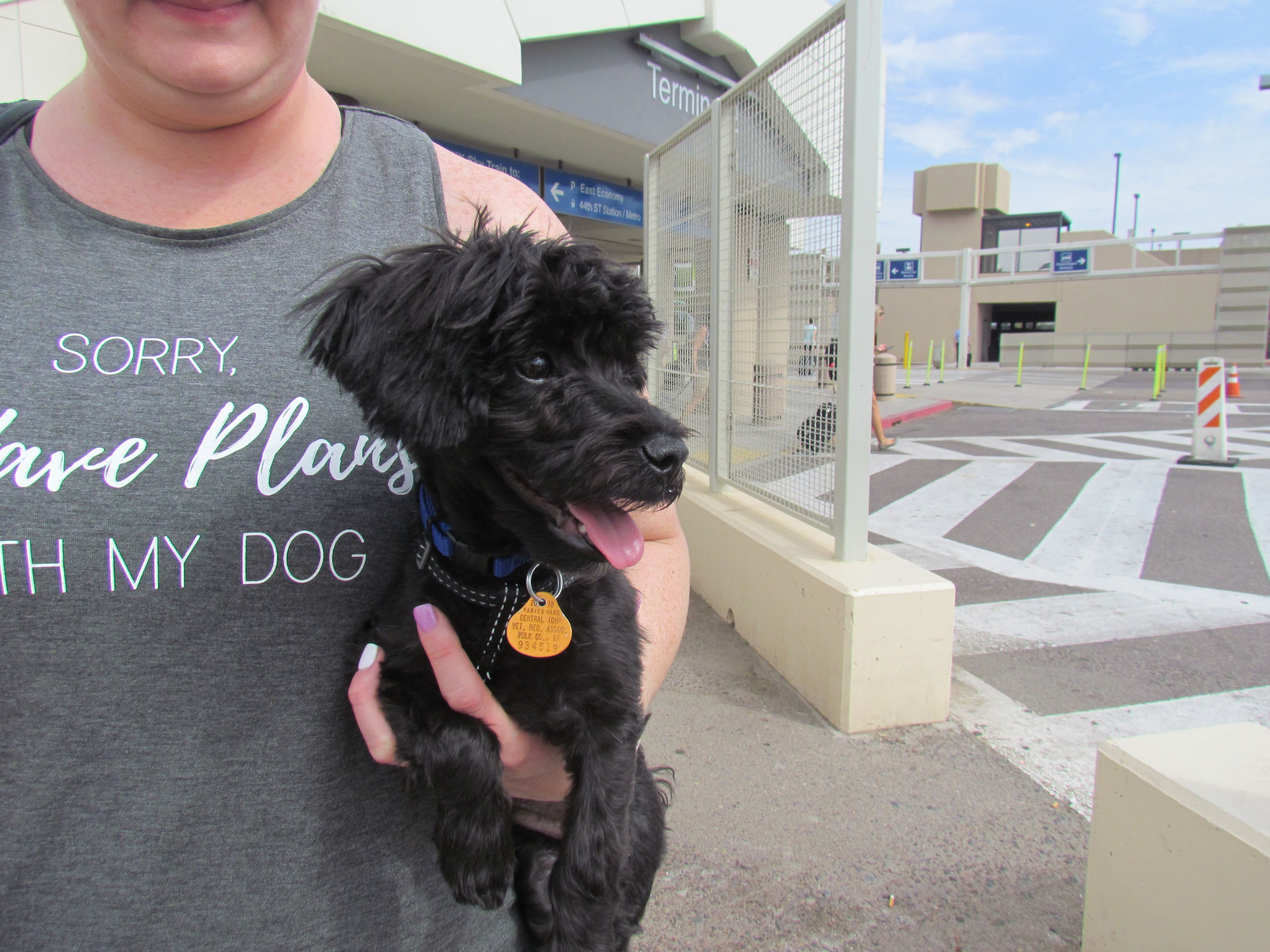 Charlee Is A Six Month Old Maltipoo From West Des Moines Iowa He