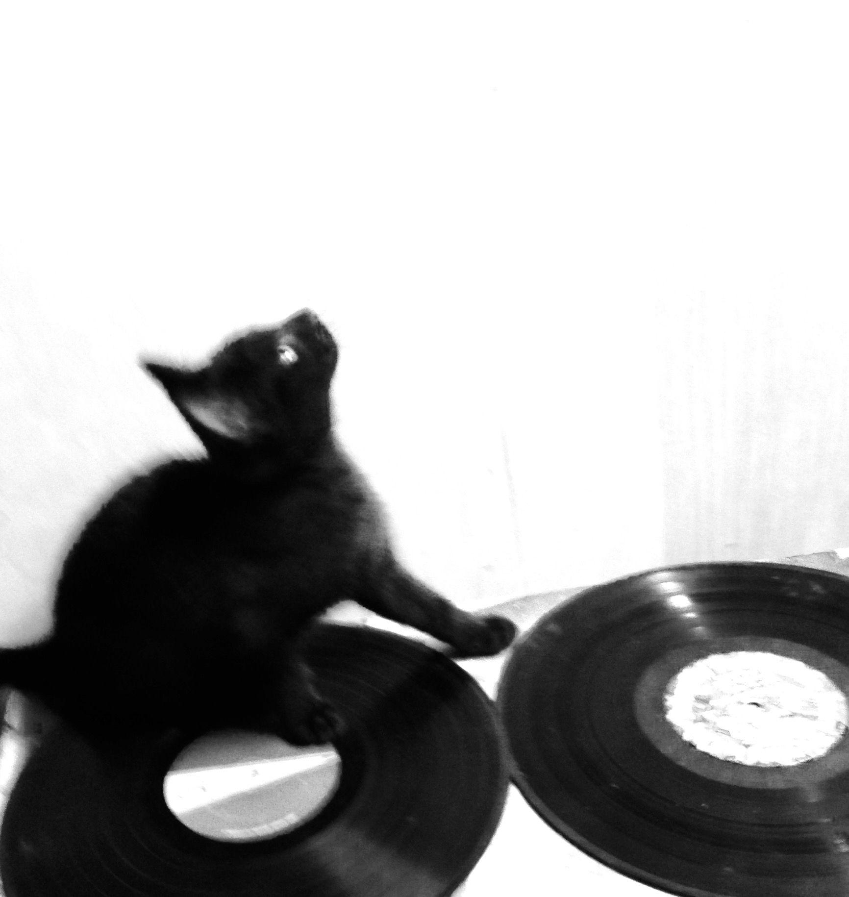 Black Kitten Playing Records Black Kitten Kitten Kitty