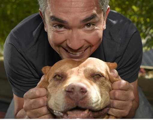 Cesar Daddy Dog Whisperer Dogs Pitbulls