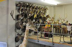 Verhuizing zoogdieren van het Zoölogisch Museum Amsterdam naar Naturalis in Leiden.