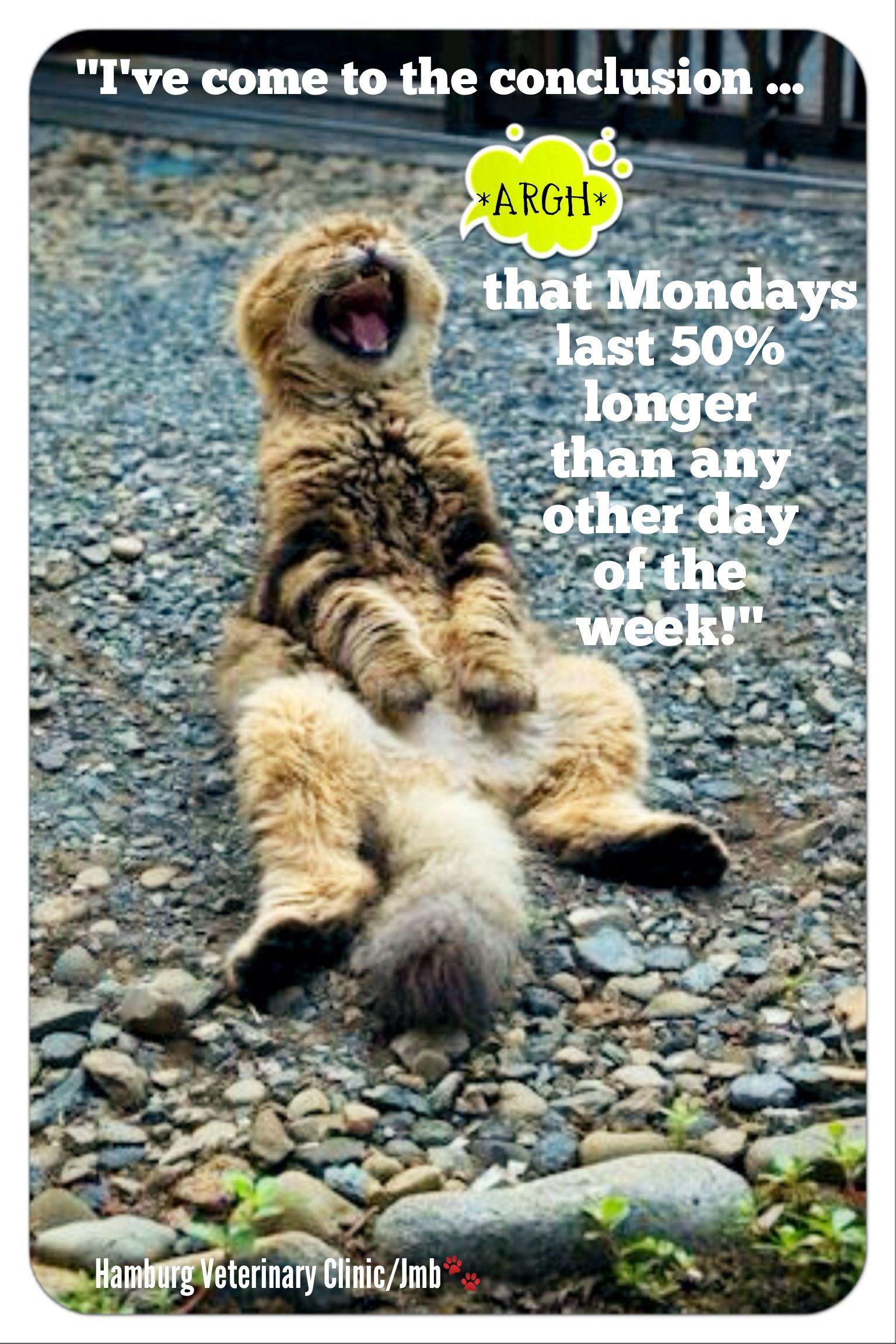 Monday humor New day New week Animal humor Cute