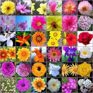 El Blog de la Loles Independiente 2: Las flores de Bach