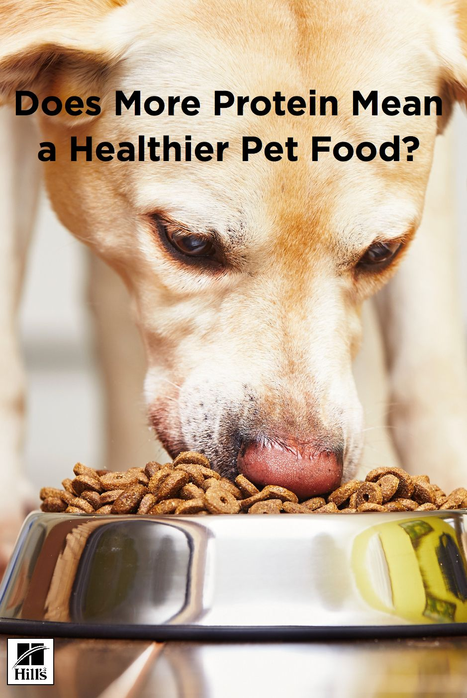 High protein pet food isnt always good for pets food