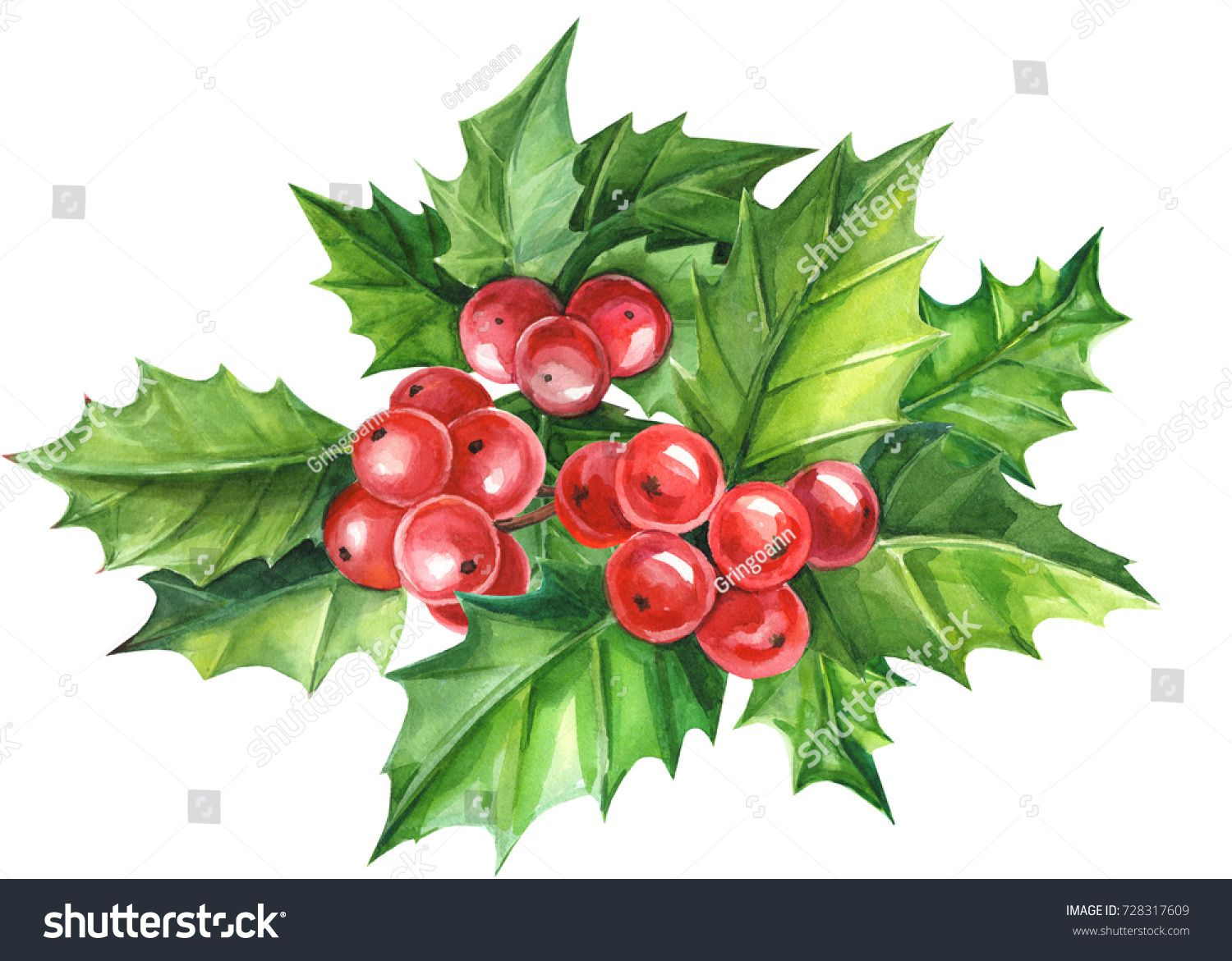 Christmas Holly Berries Watercolor Illustration Christmas