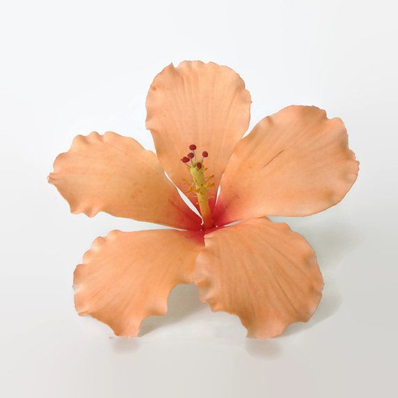 This Hibiscus Is Perfect For A Tropical Themed Wedding I Was