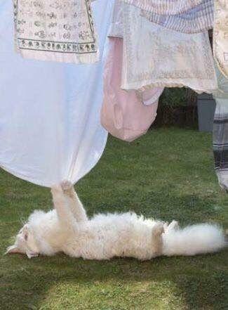 Ana Rosa Memes De Animales Tiernos Gatitos Esponjosos Gatos Bonitos