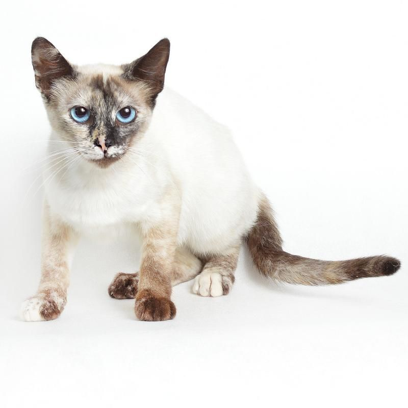 Adopt Athena Los Angeles On With Images Pets Athena Animals