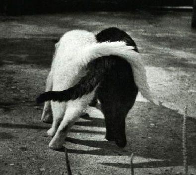 любовь черно-белая картинка