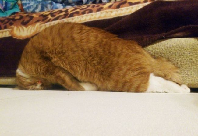 25furry masters who have perfected the art ofthe cat nap