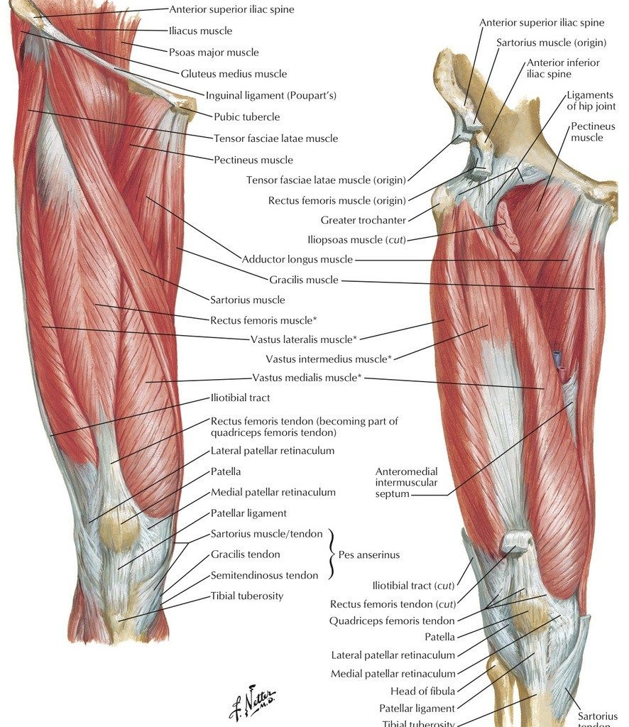 human anatomy quizlet anatomy 3 lower limb diagram quizlet [ 886 x 1024 Pixel ]