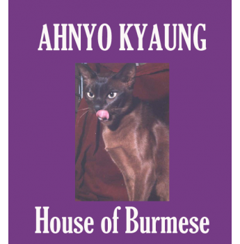 Ahnyo Kyaung House Of Burmese Is A Small Cattery In The Inner
