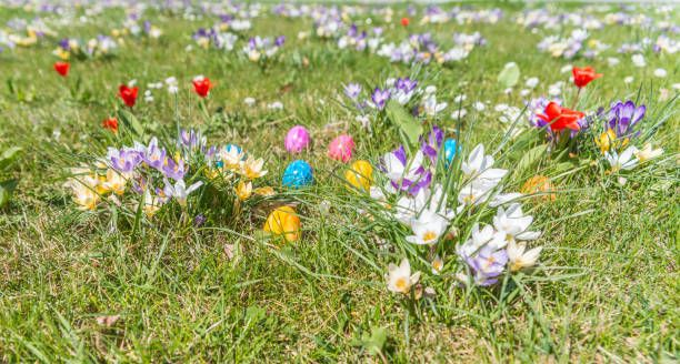 easter egg on grass with beautiful flowers