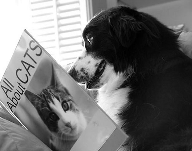 25 Dogs That Love Reading Dogs Cat Reading Dog Photos