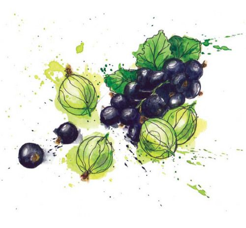 Berries in watercolours, by Georgina Luck