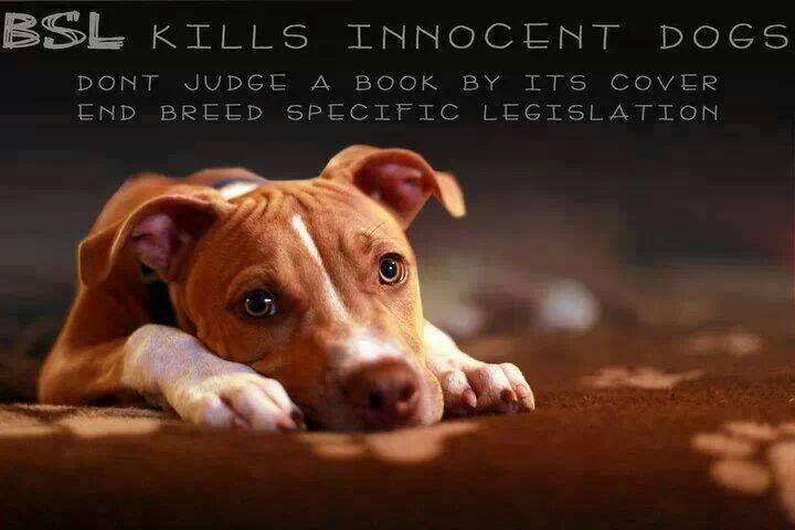 Stop the Pit Bull Bans - FB