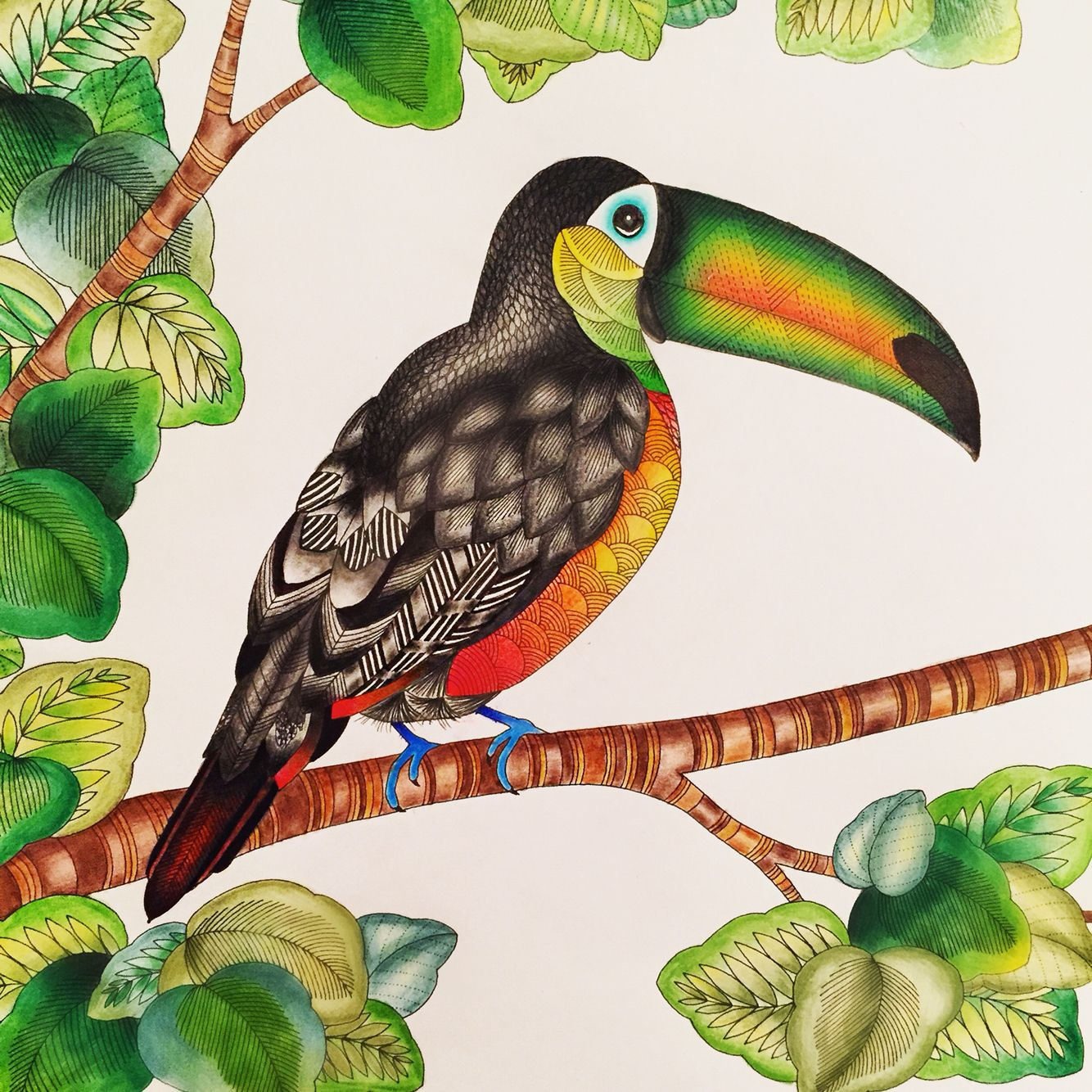 Toucan From The Millie Marotta Animal Kingdom Colouring Book Instagram Millie Marotta Animal Kingdom Animal Kingdom Colouring Book Millie Marotta Coloring Book