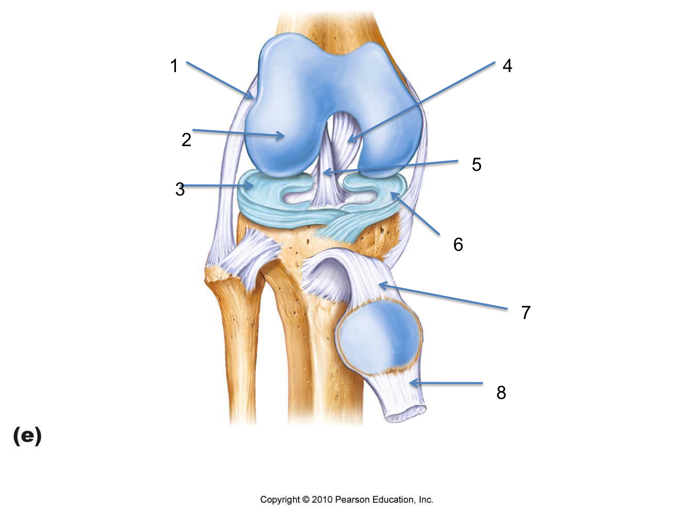 Knee anatomy label google search ap lab diagrams pinterest knee anatomy label google search ccuart Image collections