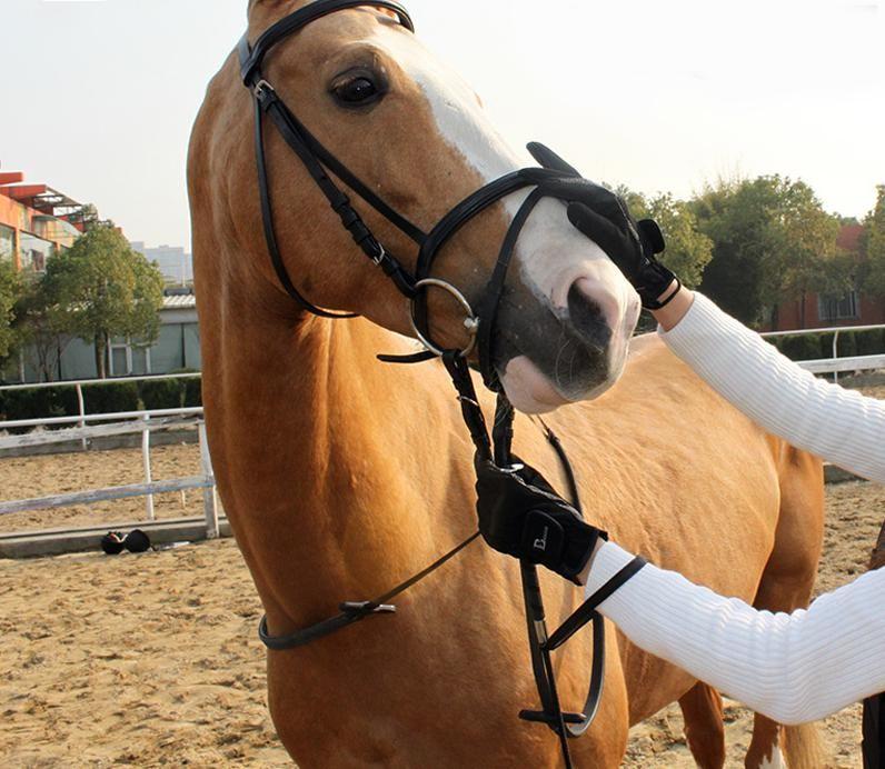 Вожжа лошадь картинка большая часть