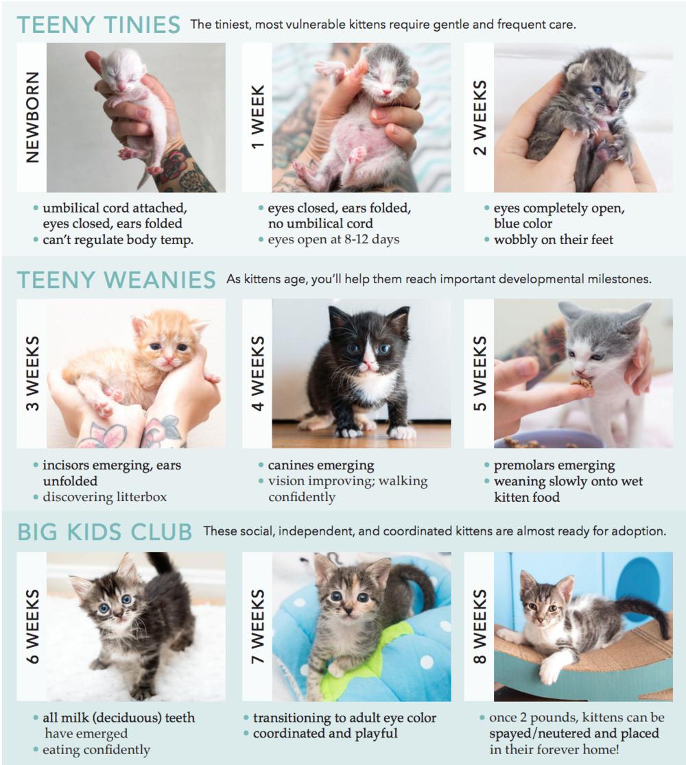 Aging Kitten Lady In 2020 Newborn Kittens Kitten Age Chart Kitten Care