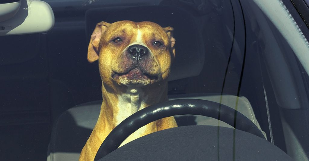 Dogsinhotcars lawflorida stat 768139 grants civil