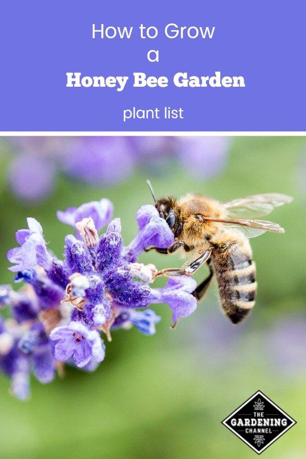 How to Grow a Honey Bee Garden | Honey bee garden, Bee ...