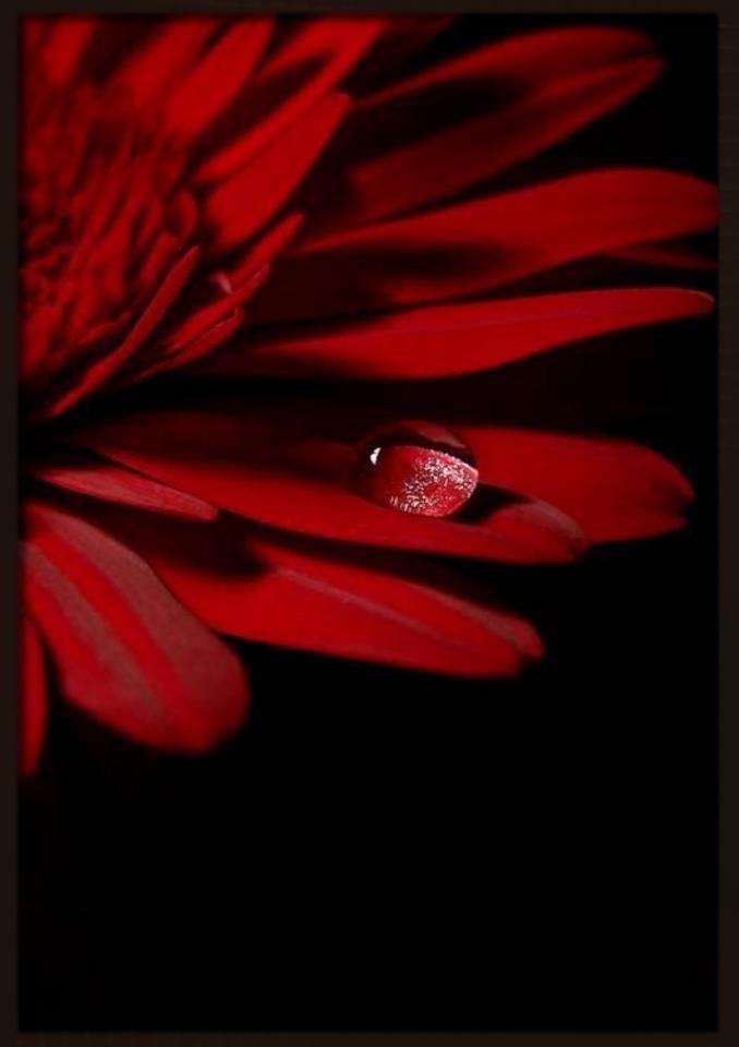 Pin Di Giampaolo Bresciani Su Rosso Rouge Red Colori Rosso E Nero