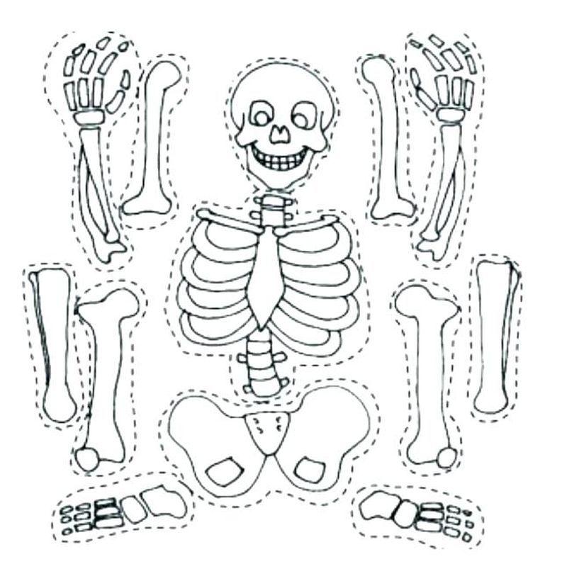 Free Printable Skeleton Coloring Pages in 2020 Skeleton