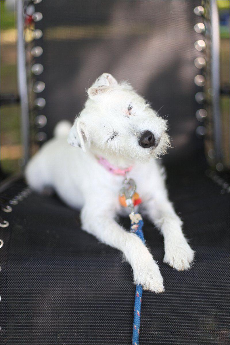 Elizabeth Jeanne Photography My sweet sweet Pippa   Jack Russell Terrier JRT