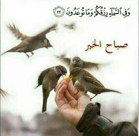 Pin By Najd On صباح ومساء Morning Images Animals Image