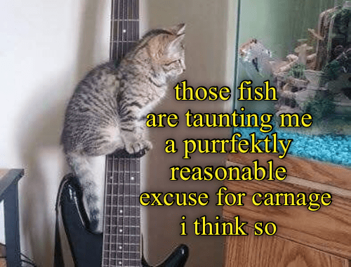 Sounds Good To Us Funny Animal Photos Funny Cat Memes Silly Cats