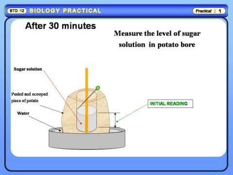 Physics Learn: Study of Osmosis by Potato Osmometer, Biology