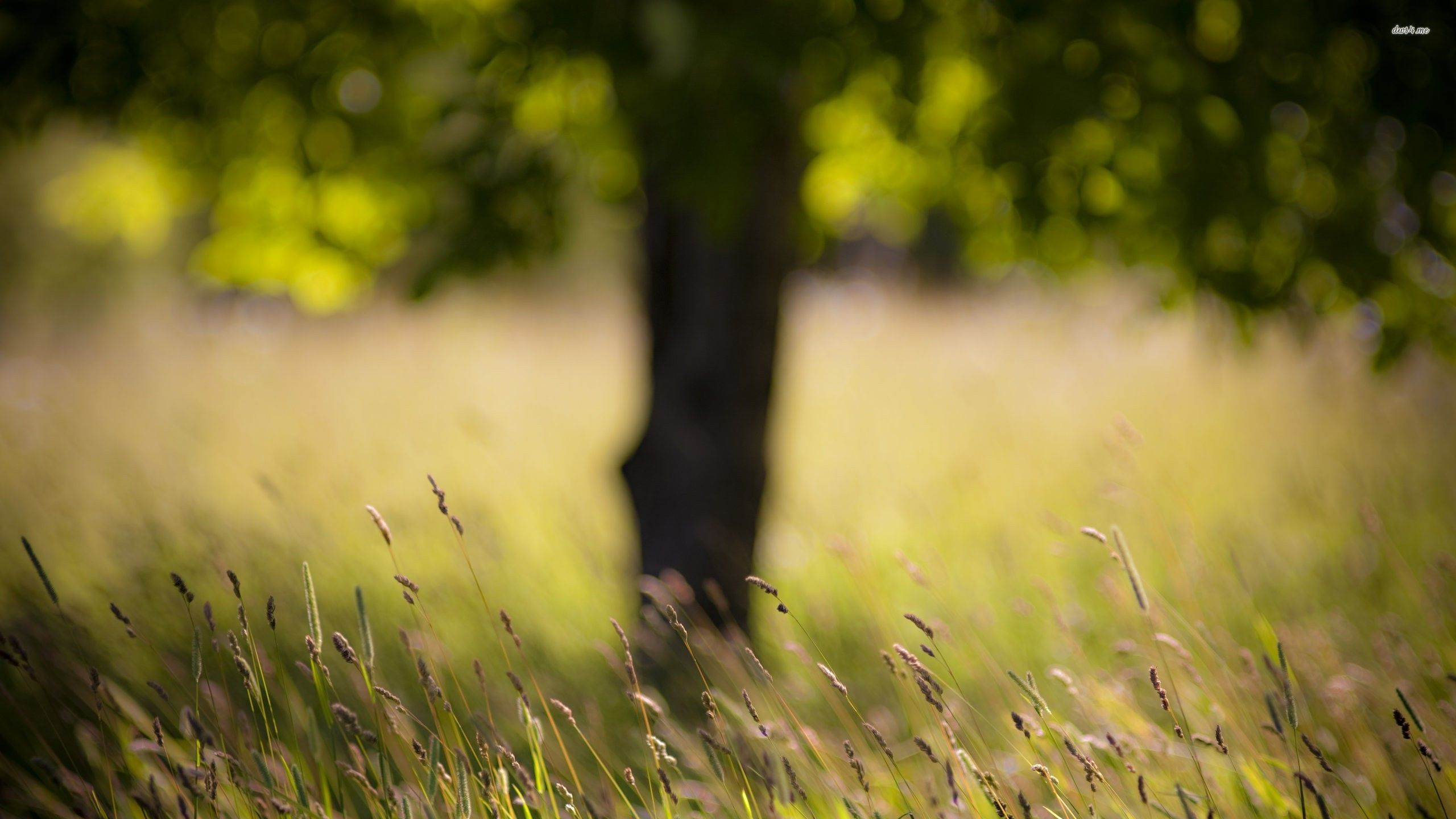 Grass with tree in the background wallpaper - Photography ...