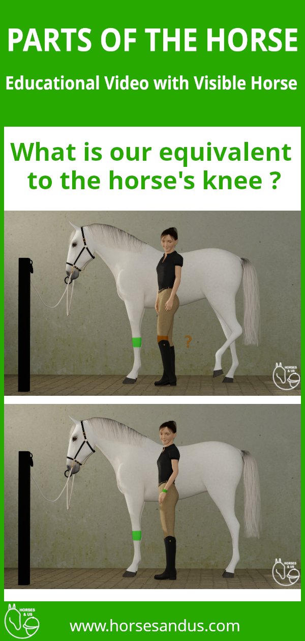 Parts Of The Horse Knee The Learning Experience Educational Videos Kids Health