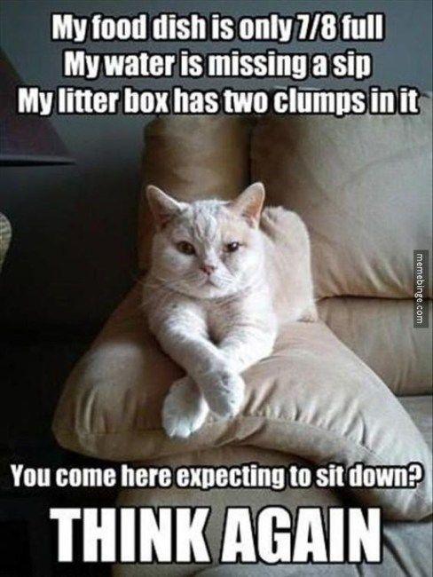 Cutesypooh Funny Cat Memes Funny Animal Memes Cat Memes